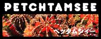 ペッタムシィー(ギムノカリキウム)ブランドページ|ペッタムシー|petchtamsee