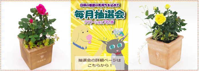 http://www.jp-akatsuka.co.jp/mail_magazine/20171229/image5.jpg